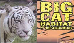 big cat habitat logo